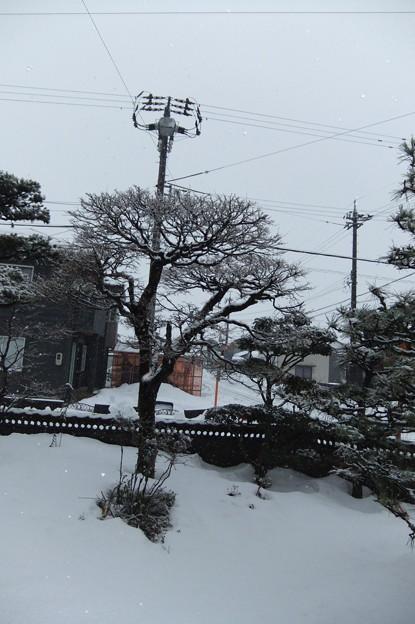 Photos: 牡丹雪が降っています 3