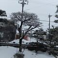 牡丹雪が降っています 3