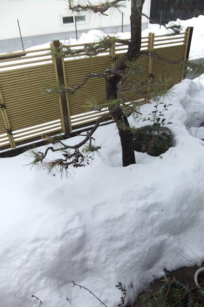 Photos: 1月19日の庭