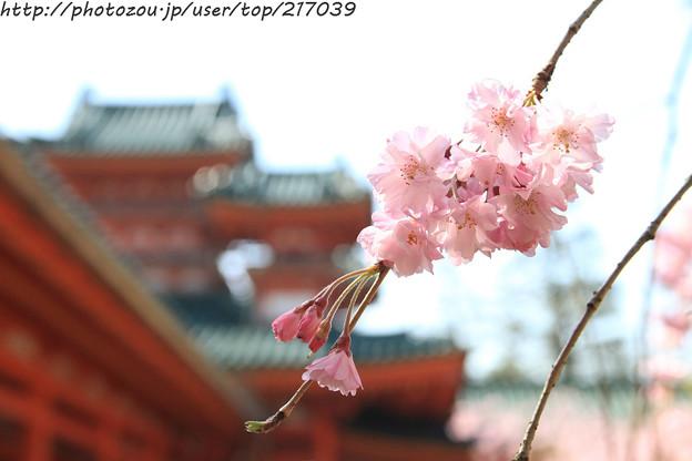 IMG_3125平安神宮・南神苑・八重紅枝垂桜と白虎楼(重要文化財)