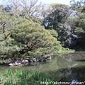 Photos: IMG_3199平安神宮・西神苑