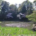 Photos: IMG_3202平安神宮・西神苑