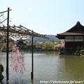 Photos: IMG_3250平安神宮・東神苑