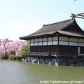 Photos: IMG_3273平安神宮・東神苑・尚美館(貴賓館)と八重紅枝垂桜