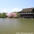 Photos: IMG_3278平安神宮・東神苑