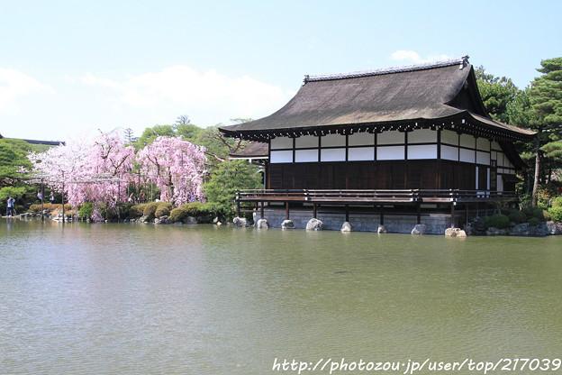 Photos: IMG_3280平安神宮・東神苑・尚美館(貴賓館)と八重紅枝垂桜