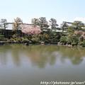 IMG_3302平安神宮・東神苑