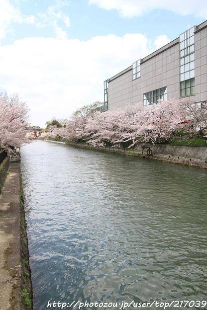 IMG_3404琵琶湖疎水