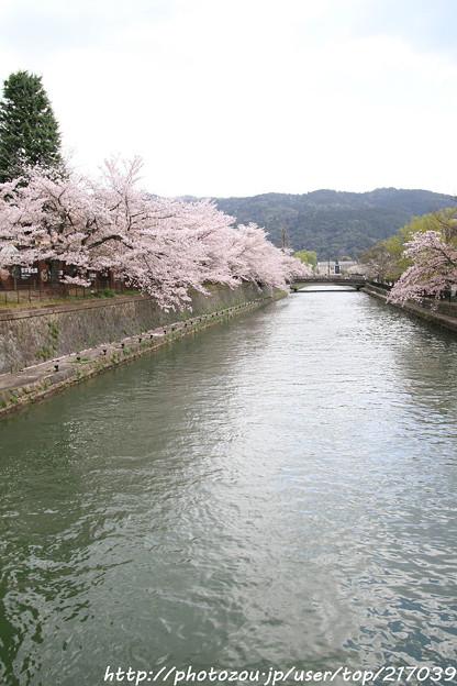 IMG_3412琵琶湖疎水