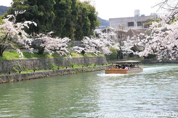 IMG_3420琵琶湖疏水・十石舟と染井吉野