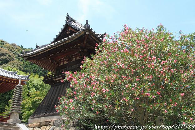 IMG_5442矢田寺・夾竹桃と鐘楼