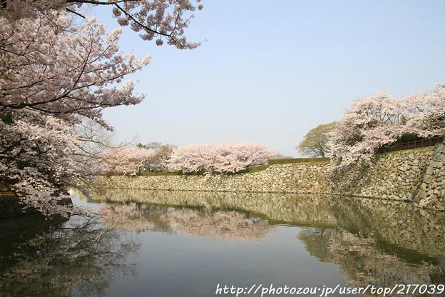 IMG_8085東御屋敷跡公園・お堀