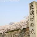 写真: IMG_8094姫路城