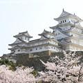 Photos: IMG_8129姫路城(国宝)と染井吉野