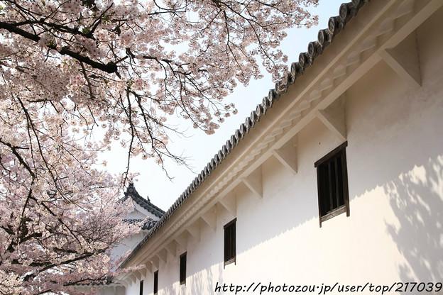 IMG_8139姫路城・百間廊下と染井吉野