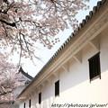 Photos: IMG_8139姫路城・百間廊下と染井吉野