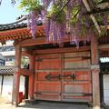 IMG_8201葛井寺・藤と四脚門(重要文化財・西門)