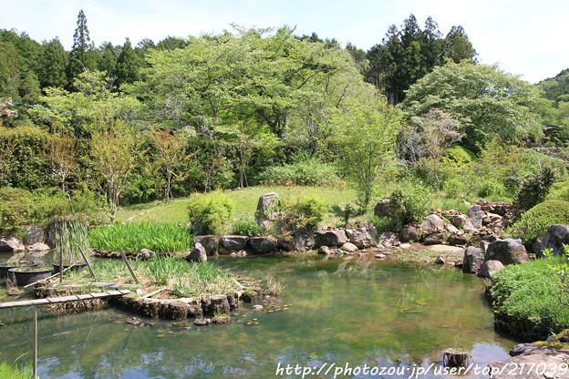 IMG_8272花の郷 滝谷花しょうぶ園