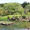写真: IMG_8272花の郷 滝谷花しょうぶ園