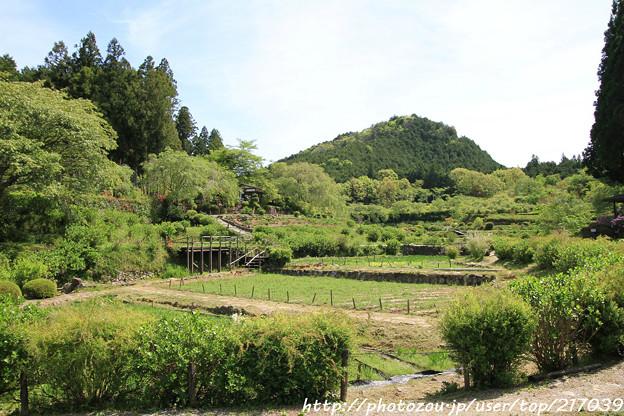 写真: IMG_8290花の郷 滝谷花しょうぶ園
