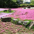 写真: IMG_8301花の郷 滝谷花しょうぶ園・芝桜