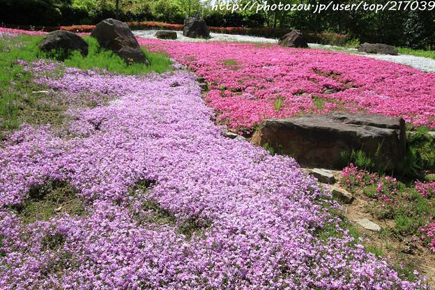 IMG_8302花の郷 滝谷花しょうぶ園・芝桜