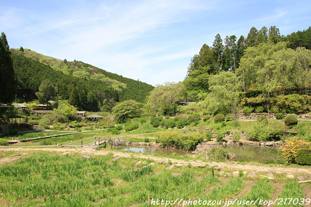 写真: IMG_8307花の郷 滝谷花しょうぶ園
