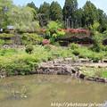 写真: IMG_8313花の郷 滝谷花しょうぶ園