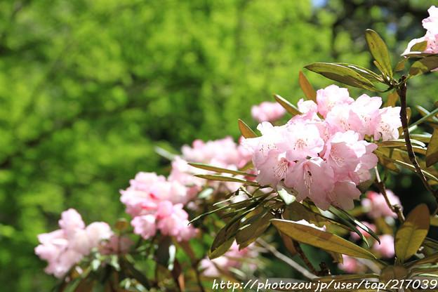 写真: IMG_8342室生寺・石楠花といろは紅葉