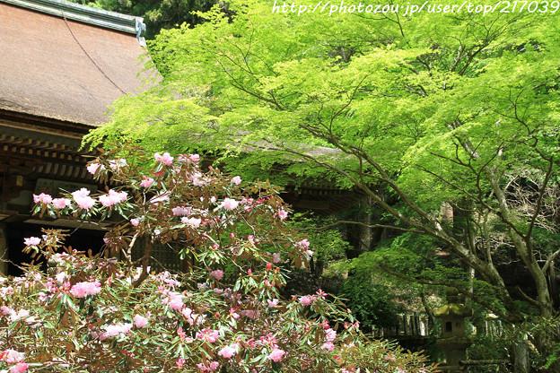 IMG_8348室生寺・石楠花といろは紅葉
