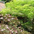 Photos: IMG_8348室生寺・石楠花といろは紅葉