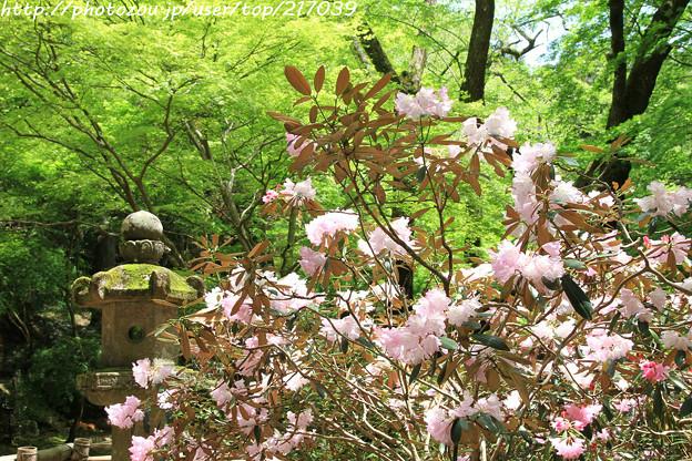 IMG_8349室生寺・石楠花といろは紅葉