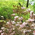 Photos: IMG_8349室生寺・石楠花といろは紅葉