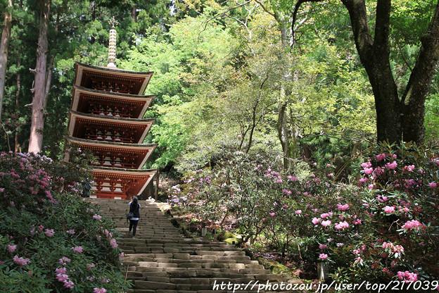 IMG_8357室生寺・五重塔(国宝)と石楠花