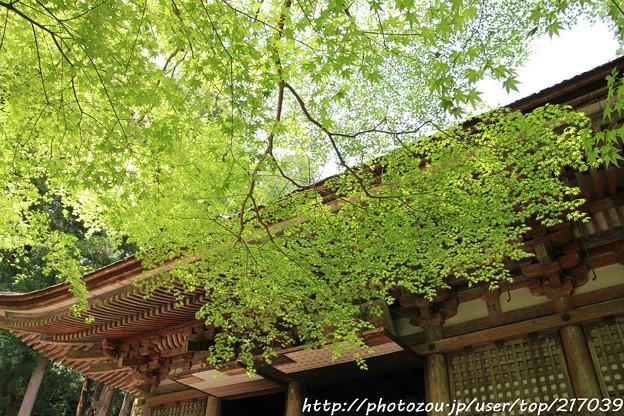 IMG_8369室生寺・いろは紅葉と本堂(潅頂堂)(国宝)
