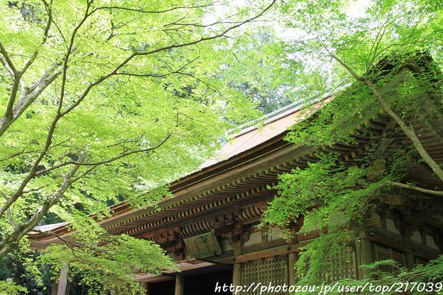 Photos: IMG_8375室生寺・いろは紅葉と本堂(潅頂堂)(国宝)