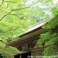 写真: IMG_8375室生寺・いろは紅葉と本堂(潅頂堂)(国宝)
