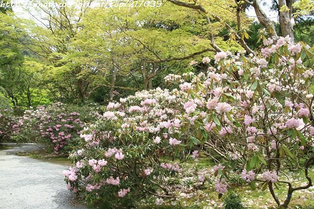 IMG_8399室生寺・石楠花といろは紅葉