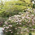 写真: IMG_8399室生寺・石楠花といろは紅葉