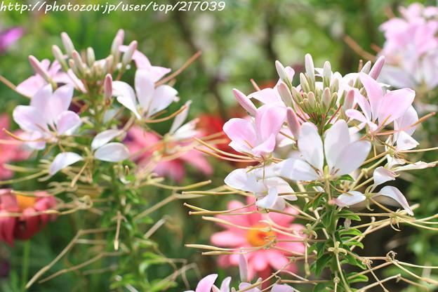 IMG_8482お花