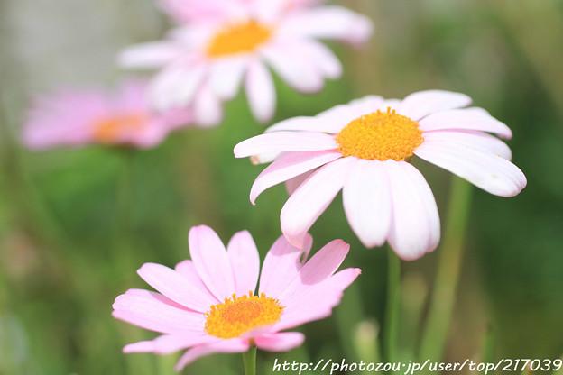 IMG_8492お花
