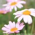 Photos: IMG_8492お花