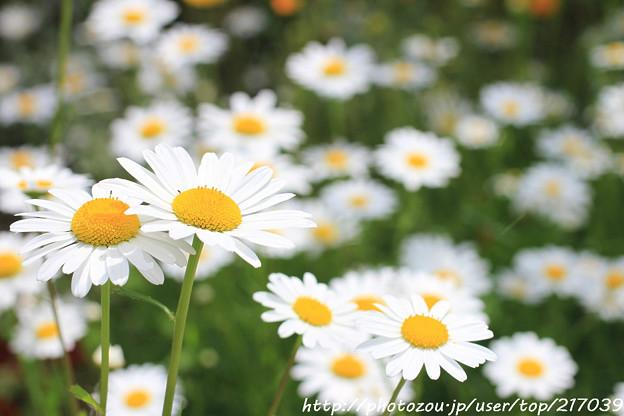 IMG_8541お花
