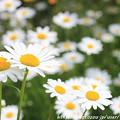 Photos: IMG_8541お花
