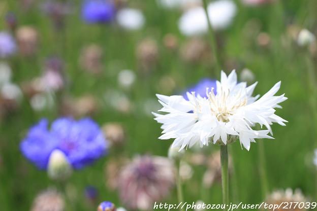 IMG_8557お花