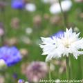 Photos: IMG_8557お花