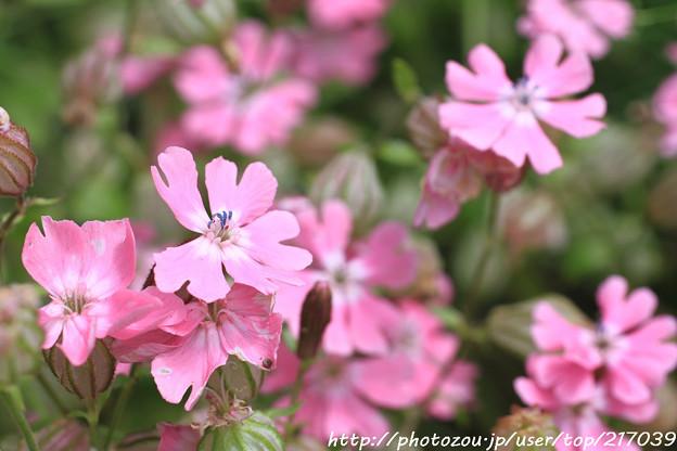 IMG_8579お花