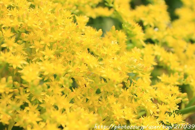 IMG_8611お花