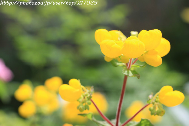 IMG_8619お花