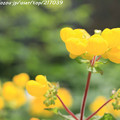 写真: IMG_8619お花